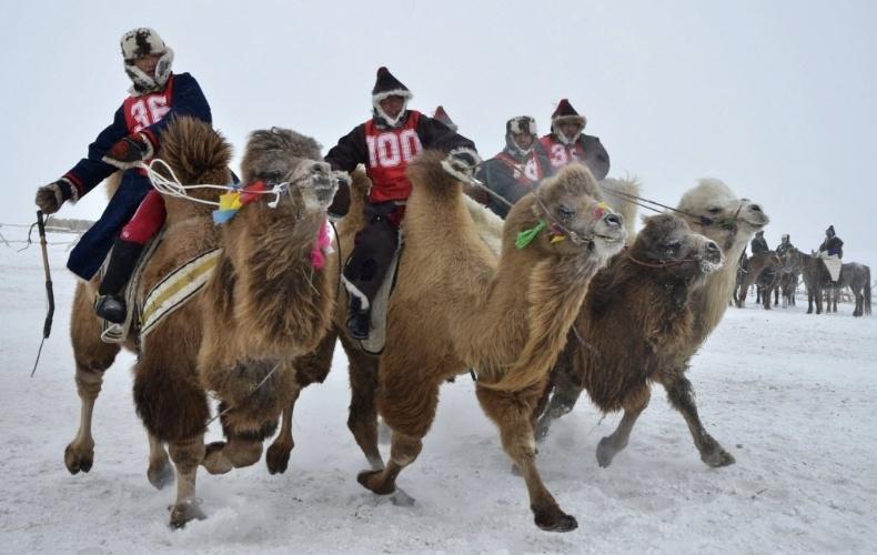 24.dez.2012 - Competidores participam de corrida de camelos em Hulun Buir, na Região Autônoma Chinesa da Mongólia