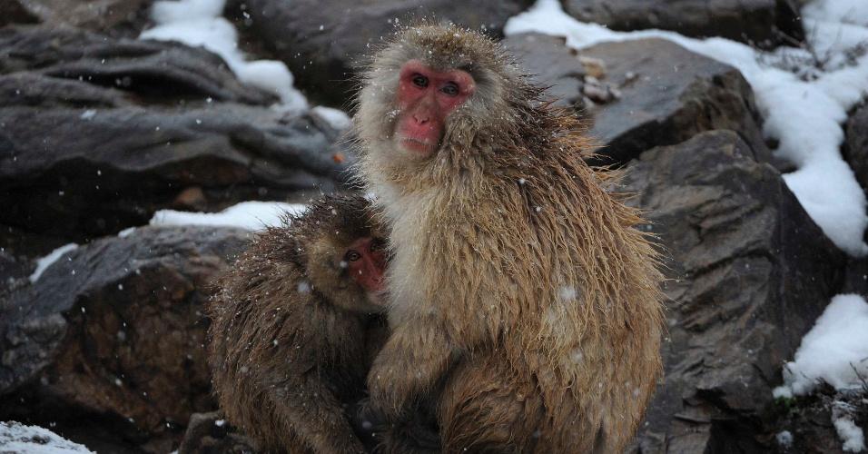 26.dez.2012 - Macaquinho se protege do frio que atinge o zoológico de Hefei, na China