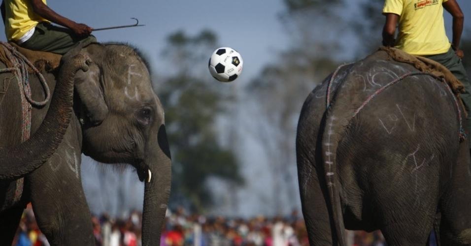 Elefante faz graça com a bola durante amistoso de futebol entre os animais no Nepal