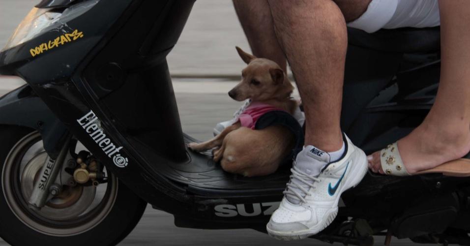 1°.jan.2013 -  Casal transporta em uma moto uma cachorrinha entre as pernas do motociclista, na marginal Tietê na altura da ponte da Freguesia do Ó, em São Paulo, no final da tarde desta terça-feira (1°). O animal não estava amarrado