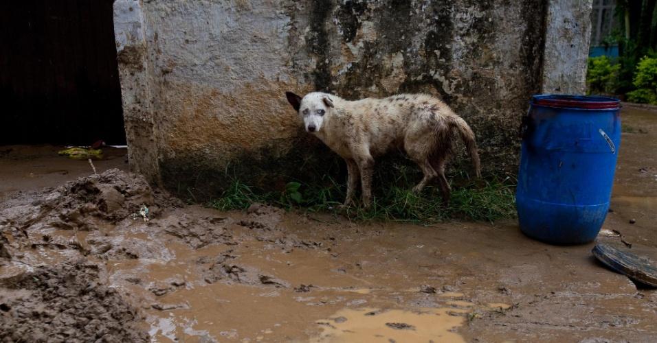 3.jan.2013 - Cachorro caminha, assustado, em meio à lama, em Xerém, Duque de Caxias, após enchente que castigou a região. As fortes chuvas deixaram um morto e desalojaram 182 pessoas, segundo balanco parcial divulgado pela Defesa Civil estadual