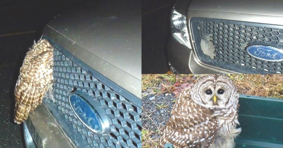 A penosa voava baixo para capturar presa antes de ser atingida pelo carro. Mas sobreviveu!
