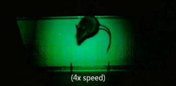 Os ratos, que antes não percebiam a diferença entre luz e escuridão, passaram a fugir de locais iluminados (foto) para se esconder em áreas escuras, assim como fazem os animais com visão normal - Reprodução/Oxford