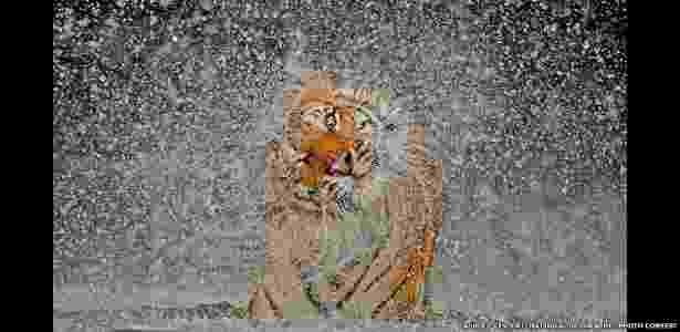 """8.jan.2012 - Em seu tradicional concurso anual de fotografia, a revista """"National Geographic"""" recebeu mais de 22 mil imagens de fotógrafos profissionais e amadores enviadas de mais de 150 diferentes países. O vencedor levou US$ 10 mil - Ashley Vincent/National Geographic Photo Contest"""