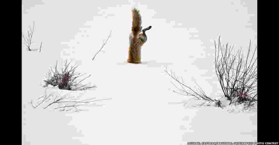 """8.jan.2012 - Em seu tradicional concurso anual de fotografia, a revista """"National Geographic"""" recebeu mais de 22 mil imagens de fotógrafos profissionais e amadores enviadas de mais de 150 diferentes países. O vencedor levou US$ 10 mil - Michael Eastman/National Geographic Photo Contest"""