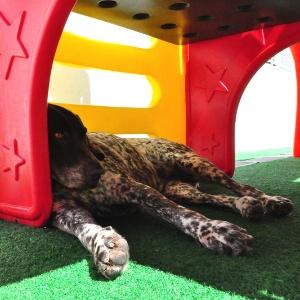 Cachorro usa sombra feita por brinquedo para descansar