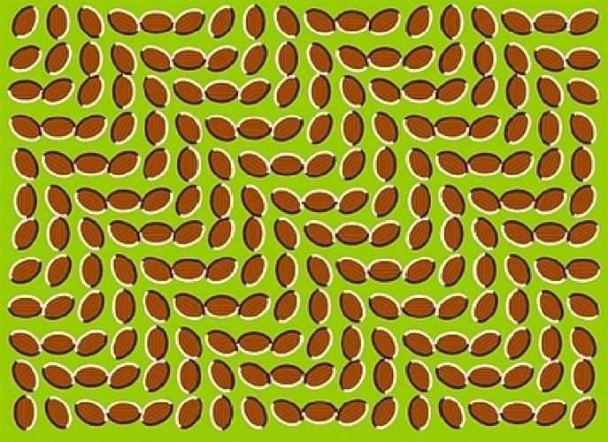 Ilusão de ótica: sementes/movimento