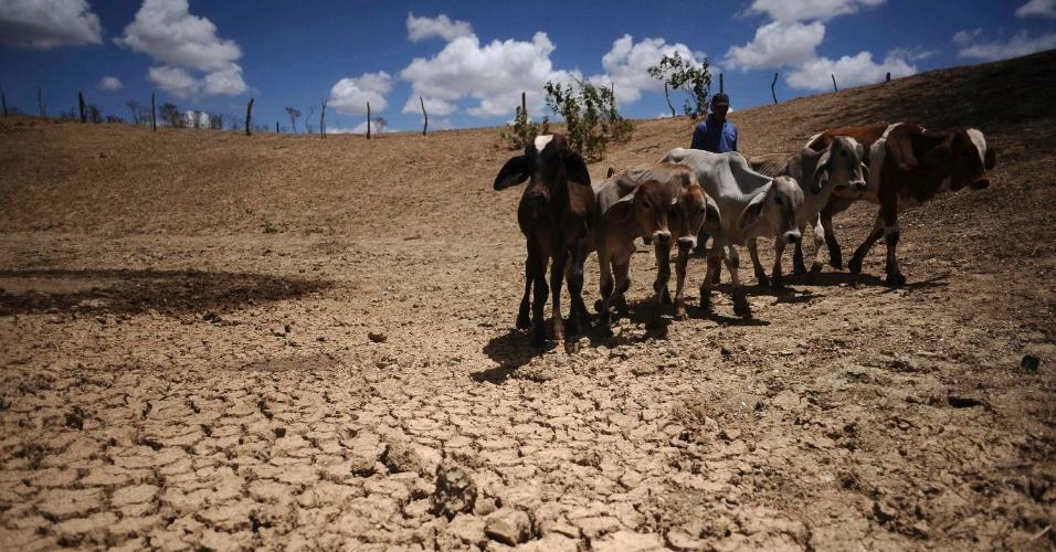 Homem atravessa área afetada pela seca no Nordeste do país