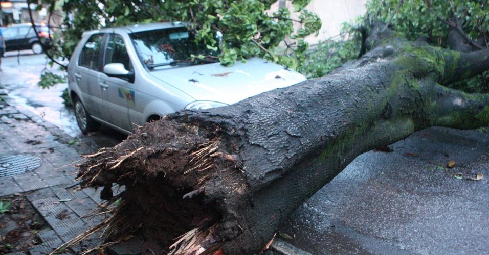 13.jan.2013 - Chuva que atinge Belo Horizonte provoca a queda de árvores na capital mineira, como a que aconteceu na rua Peçanha, no bairro Carlos Prates