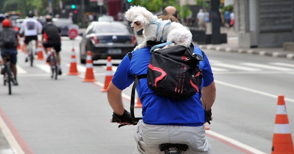 13.jan.2013 - Ciclista leva cachorro para passear na mochila, na ciclofaixa da Av. Paulista, em São Paulo