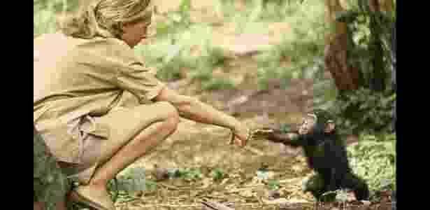 Foto de 1964 mostrando a primatologista Jane Goodall e um filhote de chimpanzé chamado Flint em uma reserva da Tanzânia - Hugo Van Lawick/National Geographic Society - Hugo Van Lawick/National Geographic Society