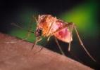 Xô, pernilongo! Saiba o que funciona e o que não funciona contra mosquitos - Reuters