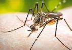O drama da dengue em Catanduva (SP) - José Bonato/UOL