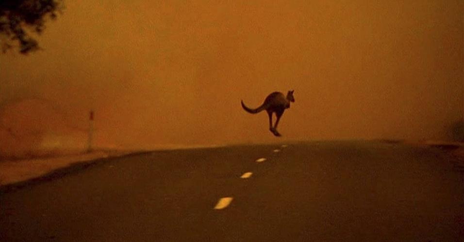 18.jan.2013 - Canguru atravessa rua em Gippsland (Austrália) para fugir do fogo que atinge a região há mais de uma semana
