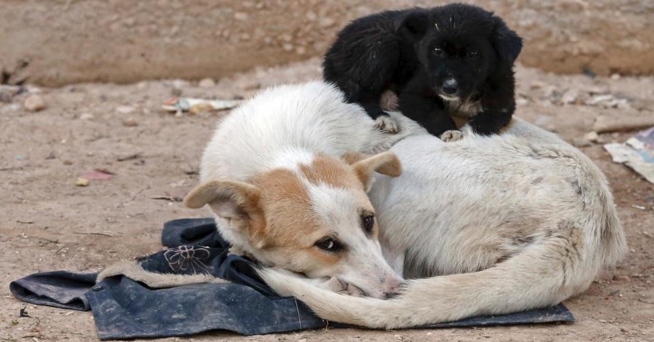 19.jan.2013 - Filhote de cachorro dorme em cima da mãe em vizinhança nos arredores de Damasco, capital da Síria