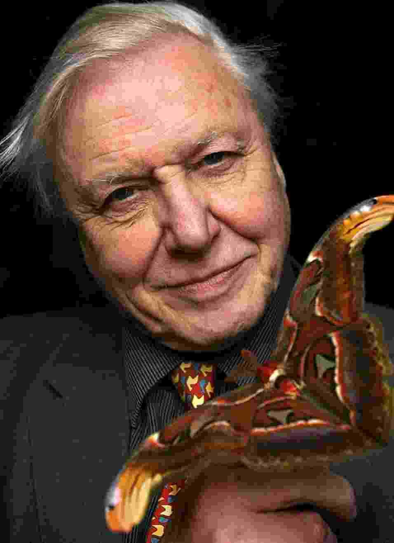 """23.jan.2013 - David Attenborough, prestigiado naturalista britânico, disse em entrevista que  os humanos são """"uma praga sobre a Terra"""" e que é preciso controlar o crescimento da população para garantir a sobrevivência do planeta. """"Não se trata só da mudança climática. É também uma questão de espaço, se haverá lugares suficientes para cultivar alimentos para fornecer a essa enorme multidão"""" - Divulgação"""