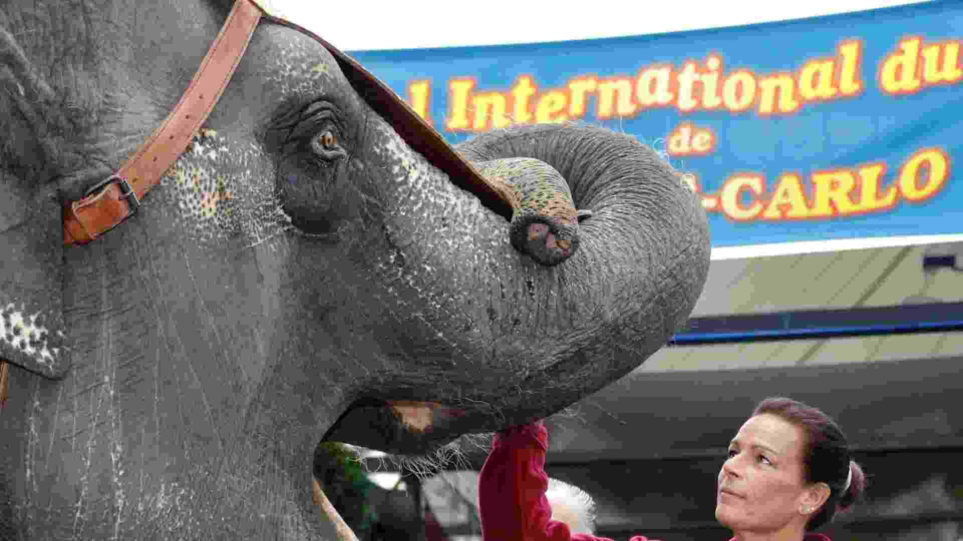A princesa Stephanie de Monaco brinca com elefante nos bastidores do Festival Internacional de Circo de Monte Carlo  - REUTERS/Eric Gaillard