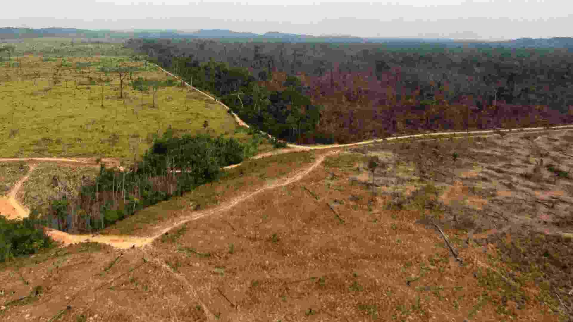 O desmatamento da Amazônia é tão ruim quanto a fumaça dos carros? Verdade - Nelson Feitosa/Ibama/Reuters