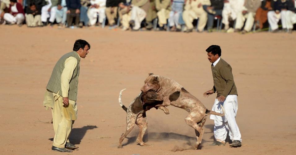26.jan.2013 - Paquistaneses assistem a rinha de cães, em Islamabad. Brigas entre cachorros são comuns nas áreas rurais do Paquistão