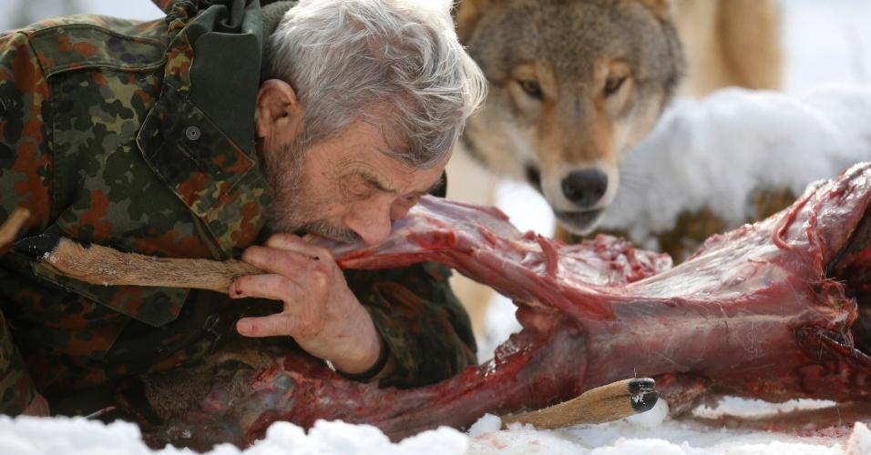 26.jan.2013 - Pesquisador Werner Freund come carne crua ao lado de lobos em parque na cidade de Merzig, na Alemanha