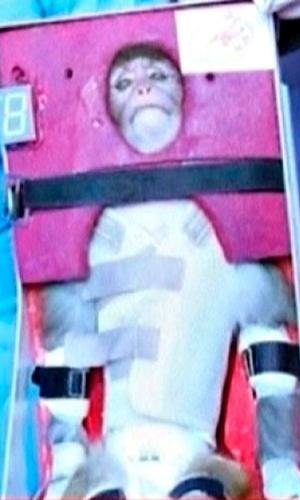 28.jan.2013 - Imagem de um vídeo sem data, divulgado nesta segunda-feira (28) pela TV estatal iraniana, mostra um macaco que foi lançado para o espaço e recuperado ainda vivo depois do pouso. Com a façanha, o Irã pretende mostrar o avanço de seu programa espacial e de mísseis, que causa alarme no Ocidente e em Israel