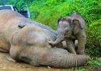 Sabah Wildlife Department/Reuters