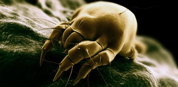 O ácaro é um aracnídeo que vive na poeira acumulada dentro dos ambientes e é invisível a olho nu - Thinkstock