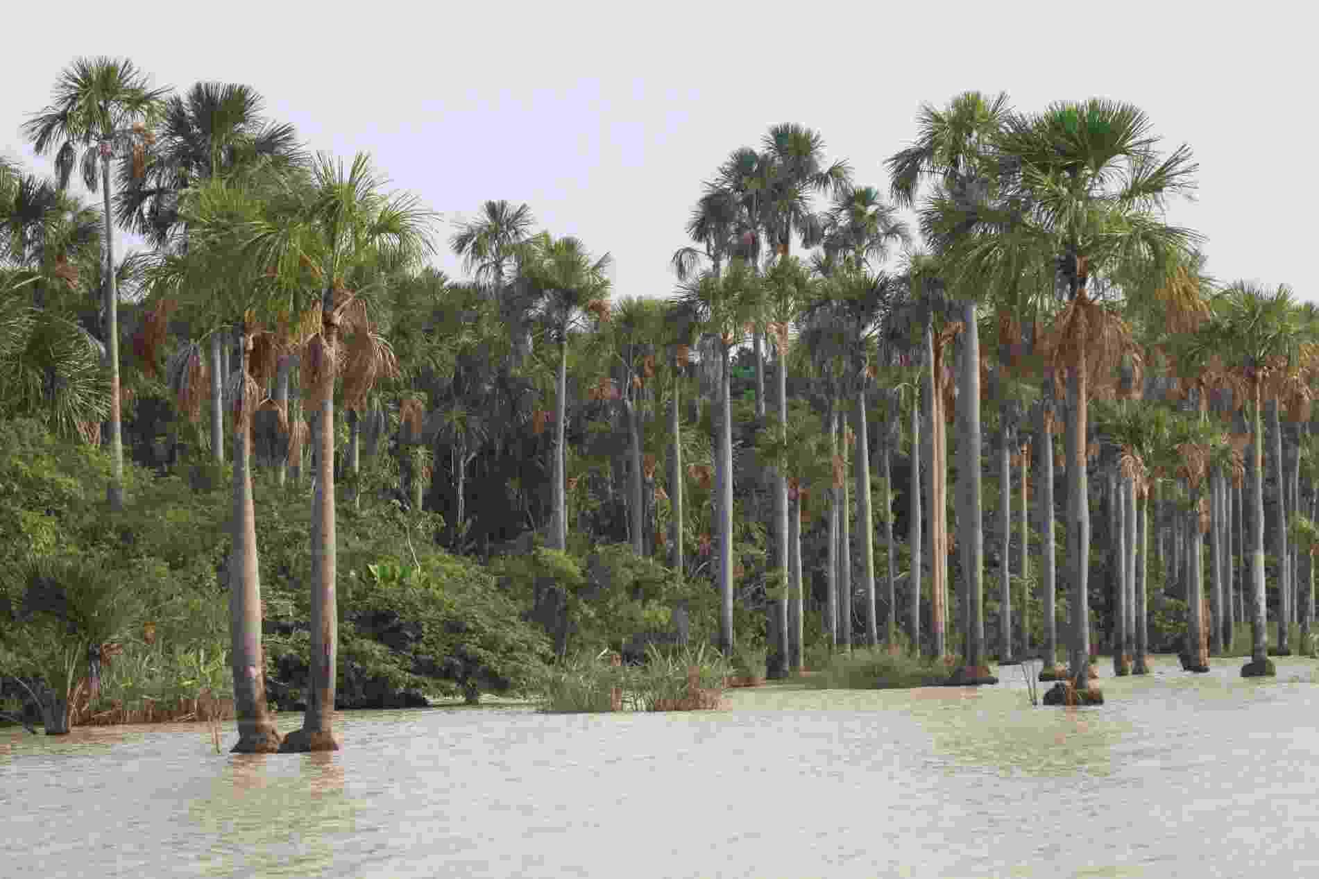 6.fev.2013 - Com mais de 6,9 milhões de hectares, Llanos de Moxos, na Amazônia boliviana, foi apontada a maior área úmida do mundo e incluída na lista de áreas prioritárias de conservação ambiental. Segundo a WWF, essas áreas úmidas são importantes por abrigar biodiversidade - foram catalogadas 131 espécies de mamíferos, 568 de aves, 102 de répteis, 62 de anfíbios, 625 de peixes e mil espécies de plantas - evitar inundações, manter vazões mínimas nos rios durante a seca e regular o ciclo hidrológico da região - Divulgação/WWF