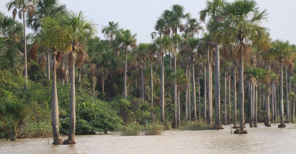 6.fev.2013 - Com mais de 6,9 milhões de hectares, Llanos de Moxos, na Amazônia boliviana, foi apontada a maior área úmida do mundo e incluída na lista de áreas prioritárias de conservação ambiental. Segundo a WWF, essas áreas úmidas são importantes por abrigar biodiversidade - foram catalogadas 131 espécies de mamíferos, 568 de aves, 102 de répteis, 62 de anfíbios, 625 de peixes e mil espécies de plantas - evitar inundações, manter vazões mínimas nos rios durante a seca e regular o ciclo hidrológico da região