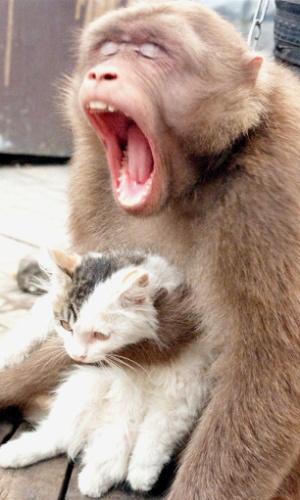 4.set.2012 - Macaco babuíno chamado Houzi segura gato no zoológico de Pequim, na China