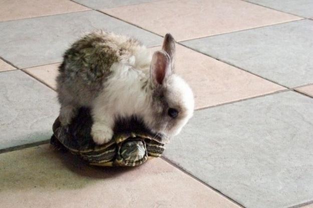 Filhote de coelho sobe em tartaruguinha