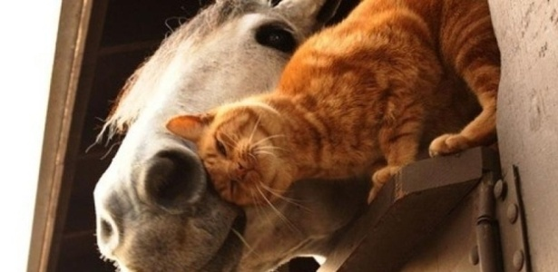 Gatinho esfrega a cabeça em cavalo em uma fazenda