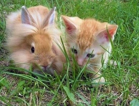 Gato e coelho da mesma cor posam juntos para foto