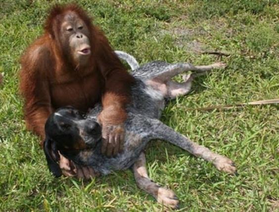 Macaco faz carinho em cachorro, que faz uma cara de quem está recebendo uma massagem