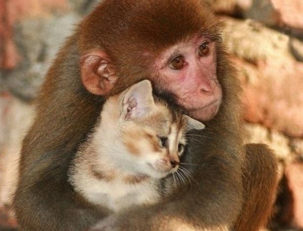 Macaco faz carinho em filhote de gato, que parece bem aconchegado