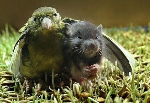 Rato e pássaro posam para foto bem juntinhos