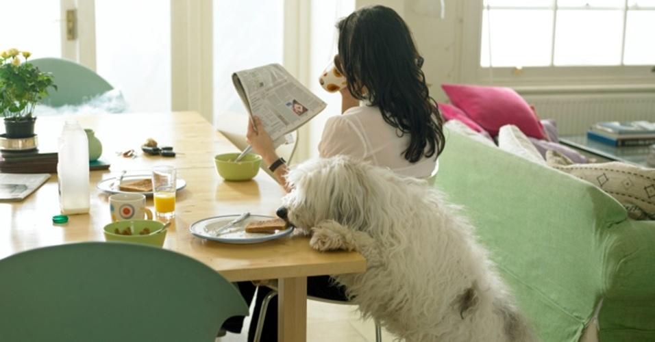 Cães domesticados tendem a roubar comida quando pensam que não estão sendo observados por seus donos, o que sugere que são capazes de entender o ponto de vista humano, mostra novo estudo comportamental