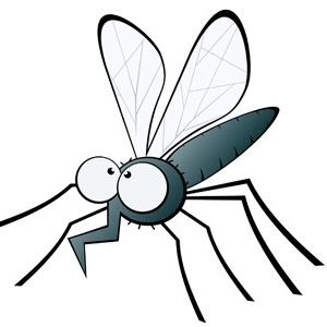 O Culex quinquefasciatus também é chamado de pernilongo ou muriçoca
