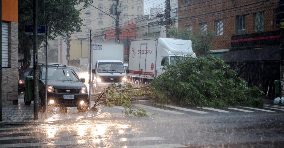 14.fev.2013 - Árvore cai no cruzamento das ruas Arthur de Azevedo e rua Francisco Leite, em Pinheiros, durante forte chuva que atingiu São Paulo