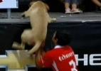 Blog: Cachorro invade partida na areia e ganha empurrão de jogador para a arquibancada - Reprodução/Sportv