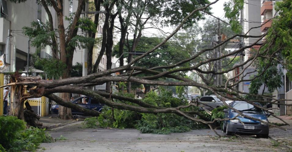 15.fev.2013 - Árvore cai e atinge carro na rua dos Três Irmãos, no Morumbi, zona sul de São Paulo
