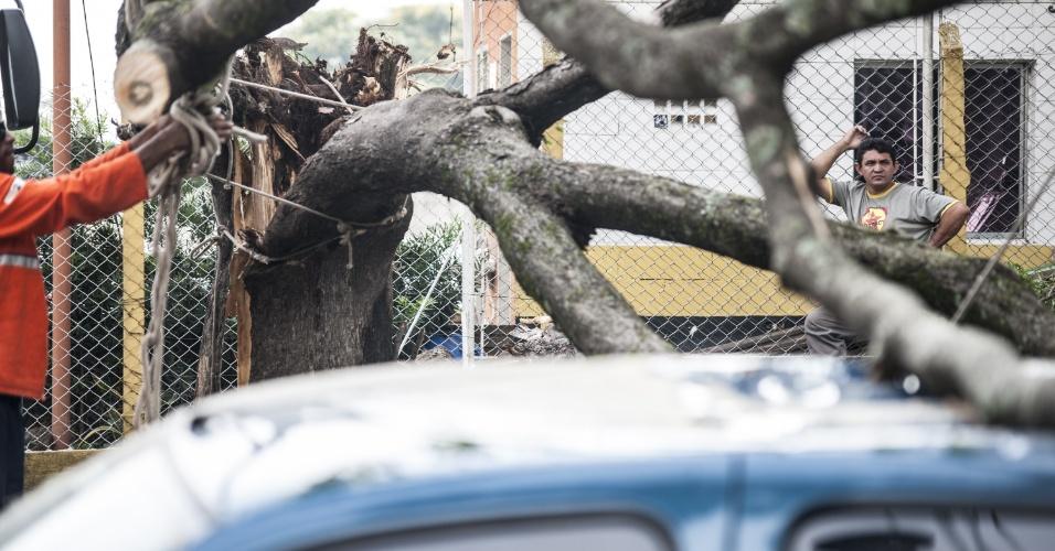 15.fev.2013 - O temporal que atingiu a capital paulista no fim da tarde de quinta-feira (14) causou estragos em várias regiões da cidade. Até a manhã desta sexta-feira (15) 14 árvores interditavam parcialmente diversas vias e uma, no bairro Butantã, impedia a circulação total de carros desde as 18h de ontem