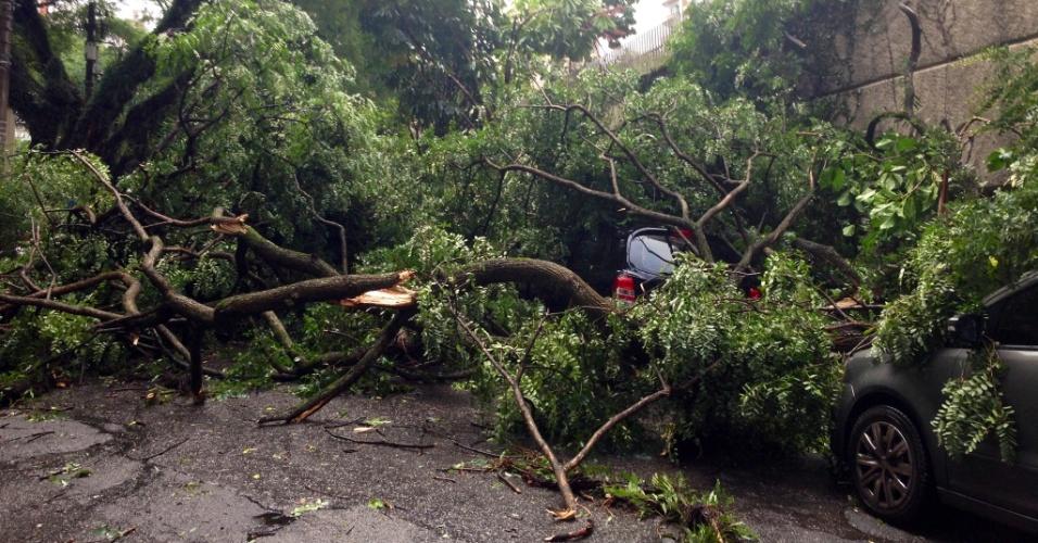 18.fev.2013 - Árvore cai sobre carro na Vila Mascote, na zona sul de São Paulo, nesta segunda-feira (18). O temporal que atingiu a capital também causou diversos pontos de alagamento