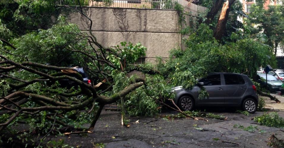 18.fev.2013 - Árvore cai sobre carro na Vila Mascote, na zona sul de São Paulo, nesta segunda-feira (18). O temporal também causou alagamentos por toda a cidade