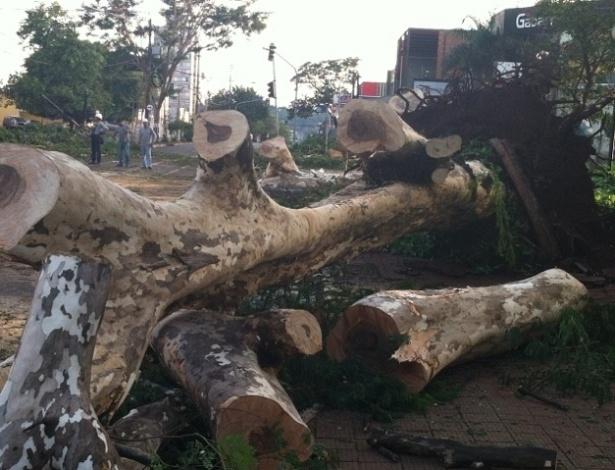 Funcionários da CPFL removem árvore que caiu no cruzamento das avenidas Independência e Nove de Julho, em Ribeirão Preto (SP)