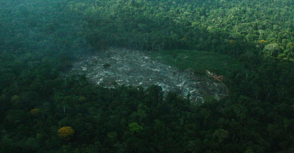nov.2012 - Vista aérea mostra clareia aberta na floresta por fazendeiros em Cachoeira Seca, território indígena no Pará