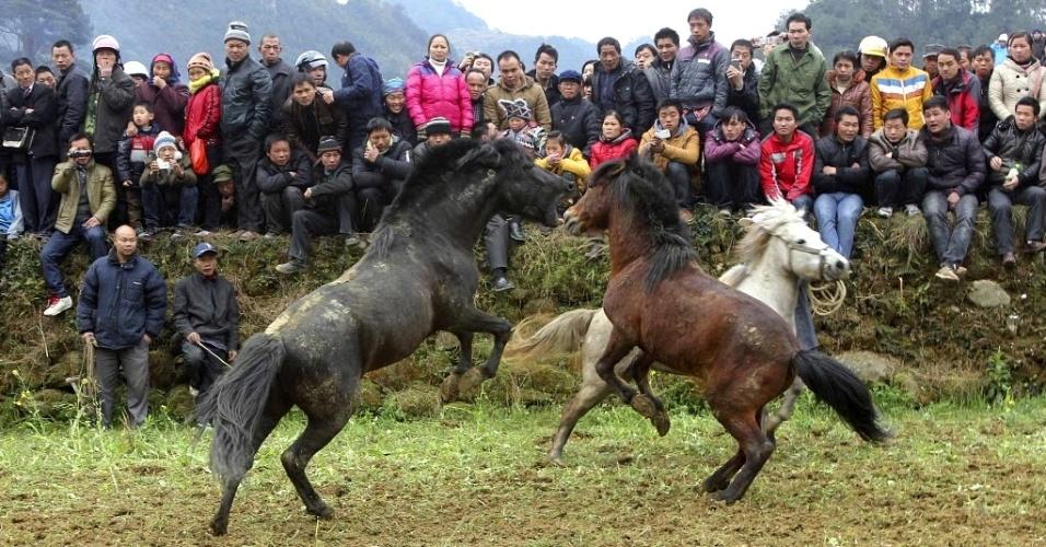 21.fev.2013 - Pessoas observam briga de cavalos em Rongshui Miao, na região de Guangxi Zhuang (China). A luta de cavalos é uma tradição de 500 anos de história entre a minoria étnica Miao