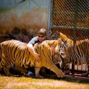 Tigres deverão fazer vasectomia, diz Justiça - Divulgação