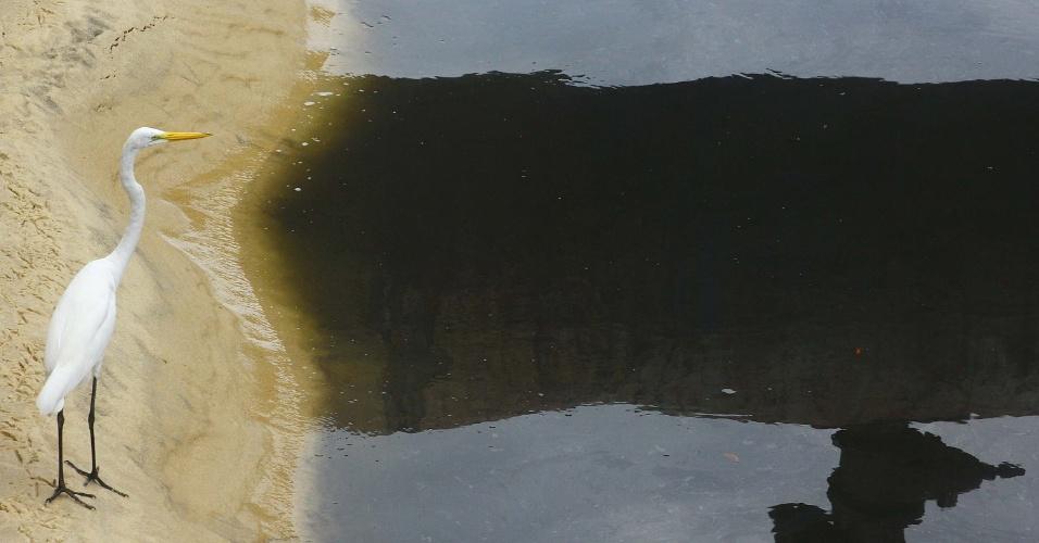 27.fev.2013 - Garça passeia por canal na praia de Ipanema, no Rio de Janeiro