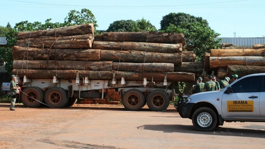 Juíza manda devolver cargas de madeira que PF confiscou em operação no Amazonas - Ibama